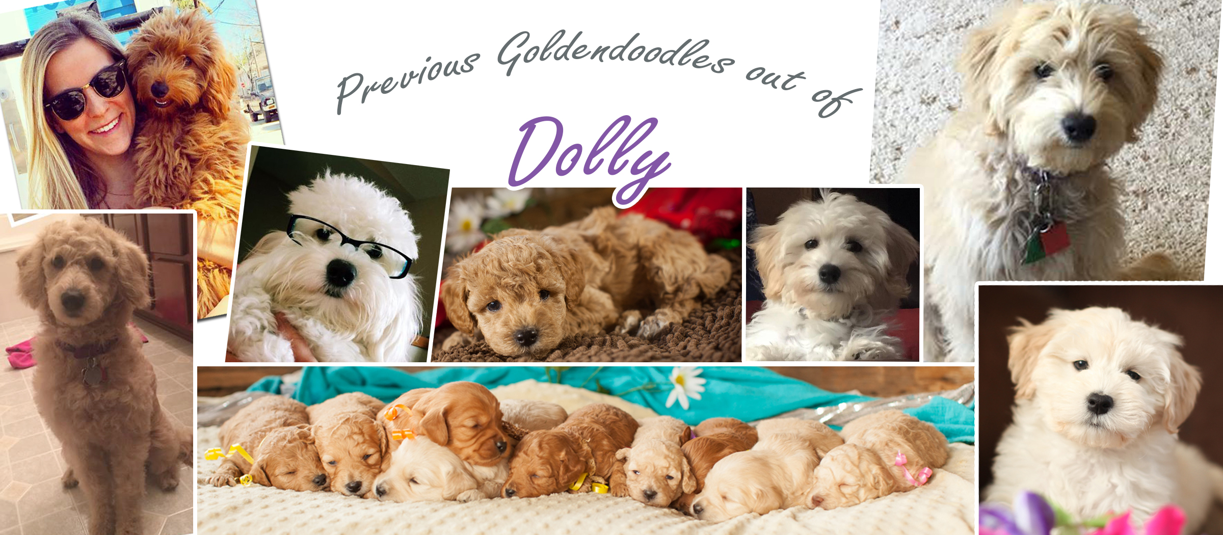 Dolly_Puppies-Recovered